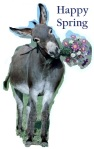 donkeywithflowers happyspring